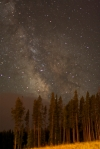 Milky Way above tree line